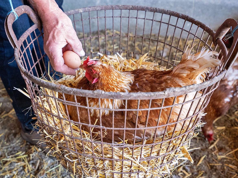 Frische Hühnereier vom Kürbishof und Bauerngarten Hertz-Kleptow